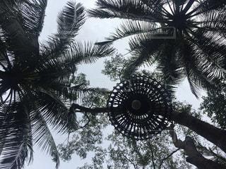 ヤシの木の写真・画像素材[885192]