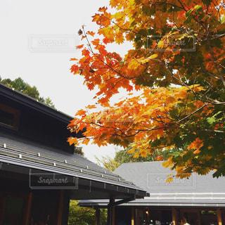 長野の紅葉の写真・画像素材[885059]