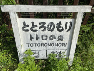 トトロの森の看板の写真・画像素材[3228988]