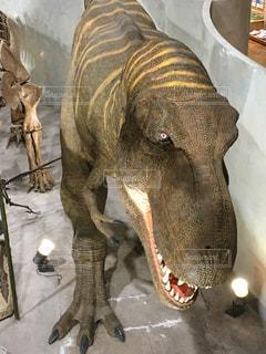 恐竜ティラノサウルスの写真・画像素材[885812]