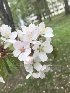 近くの花のアップ - No.886071