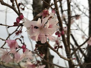 木からぶら下がっている赤い花 - No.886095