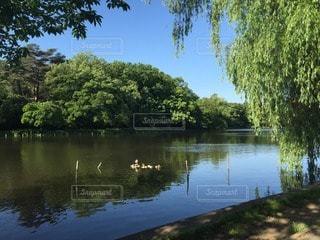 公園の写真・画像素材[29067]