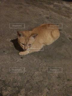 地面に横になっている猫の写真・画像素材[886286]