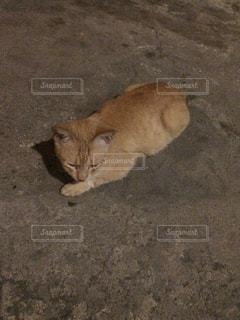 地面に横になっているオレンジと白猫 - No.886802