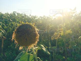 夏の悲しい思い出の写真・画像素材[996437]