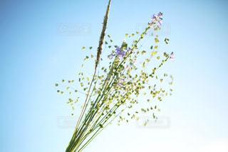 春の雑草の写真・画像素材[1016725]