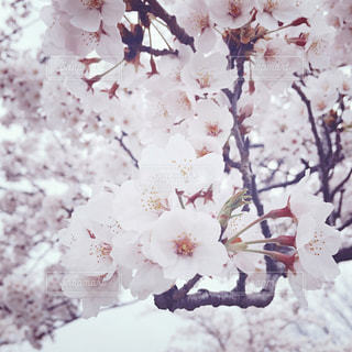 近くの花のアップの写真・画像素材[1019915]