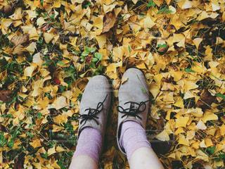 落ち葉の絨毯の写真・画像素材[1677775]