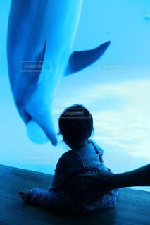 イルカを見る幼児の写真・画像素材[1677954]