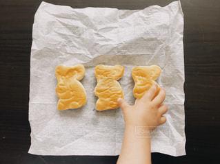 コアラなパンの写真・画像素材[2265193]