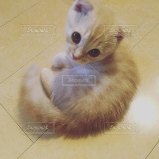 猫の写真・画像素材[13040]