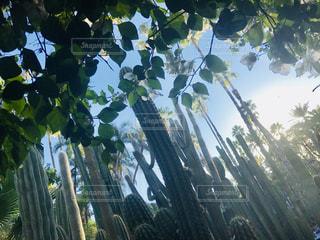 マラケシュのイブサンローランの庭の写真・画像素材[889121]