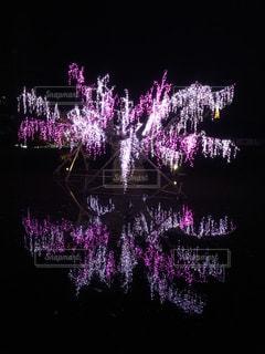 水面に映る光の桜の写真・画像素材[887342]