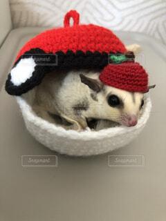 かわいい帽子の写真・画像素材[3958945]