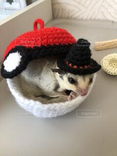 かわいすぎる小動物の写真・画像素材[3958951]