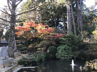 川の横にあるツリーの写真・画像素材[886692]
