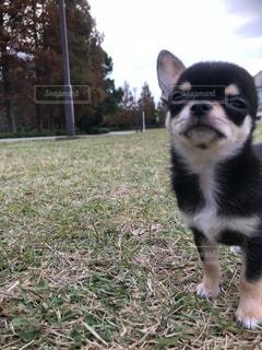 草の中に座っている犬の写真・画像素材[2784489]
