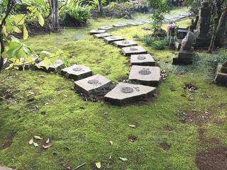 緑豊かな緑のフィールドの上に座っての芝生の椅子のグループの写真・画像素材[902699]