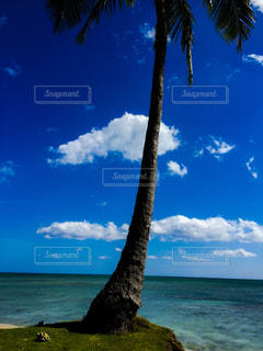 ヤシの木とビーチ - No.892717