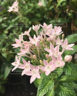 近くの花のアップの写真・画像素材[1050314]
