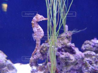 水面下を泳ぐ魚たちの写真・画像素材[888232]