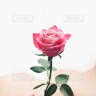 ピンクの花で一杯の花瓶の写真・画像素材[887674]