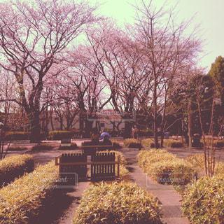 クローズ アップ庭園のの写真・画像素材[887404]