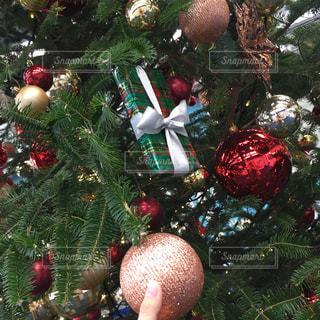 クリスマスツリーの写真・画像素材[887593]