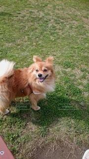 犬の写真・画像素材[27716]