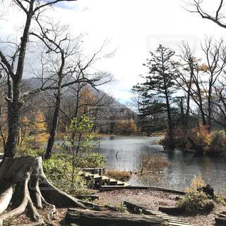 池のほとりの写真・画像素材[887717]