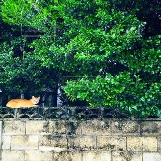 猫の写真・画像素材[53844]