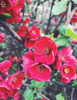 春の花の写真・画像素材[1078461]