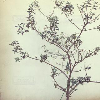 そっと佇む木の枝の写真・画像素材[1121774]