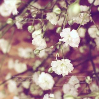 素朴で華麗な花の写真・画像素材[1367708]