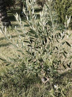 元気な草木の写真・画像素材[1681305]
