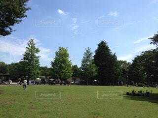 緑豊かな景色の写真・画像素材[1681308]