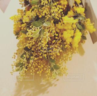 ミモザの花の写真・画像素材[1804357]