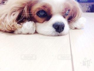 犬の写真・画像素材[37290]