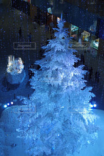 クリスマスツリーの写真・画像素材[888335]