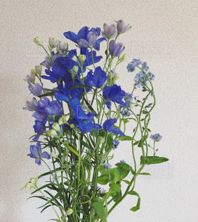 ブルーの花たち デルフィニウムと忘れな草の写真・画像素材[1058295]