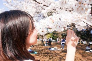 桜を見つめる女性の写真・画像素材[1833957]
