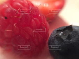 近くに赤い果実のの写真・画像素材[889191]