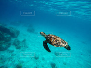水の下で泳ぐ海亀の写真・画像素材[889440]