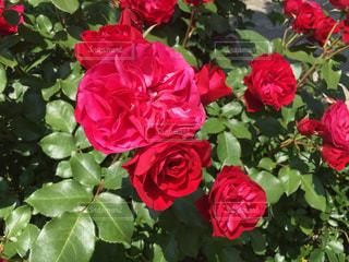 近くの花のアップの写真・画像素材[892169]