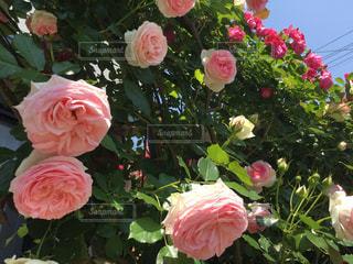 近くの花のアップの写真・画像素材[892170]
