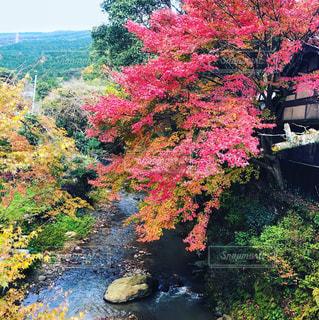 下り列車を走行する列車は森の近く追跡します。の写真・画像素材[889747]