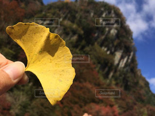 花を持っている手 - No.931044