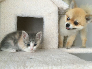 猫と犬の写真・画像素材[889837]