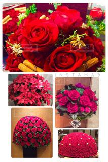 カラフルな花の植物 - No.933585